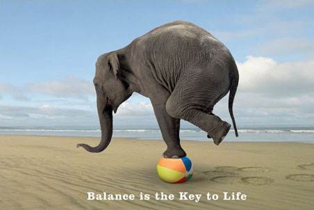 Lgpp31157+balance Is The Key To Life Balancing Elephant Poster