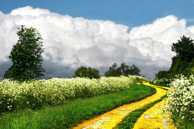 Follow The Yellow Brick Road 2