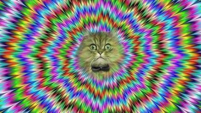 Mindcat