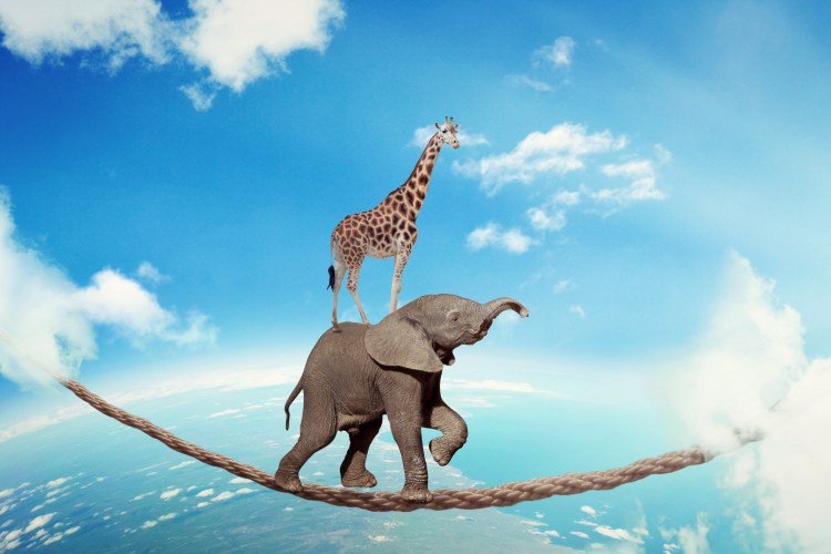 Managing Risk Business Challenges Uncertainty Concept. Elephant With Giraffe Walking On Dangerous Rope High In Sky Symbol Balance Overcoming Fear For Goal Success. Young Entrepreneur Corporate World