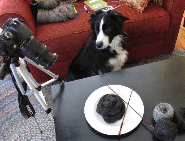 How to Bore Your Border Collie