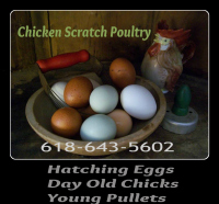 Chicken Scratch Poultry