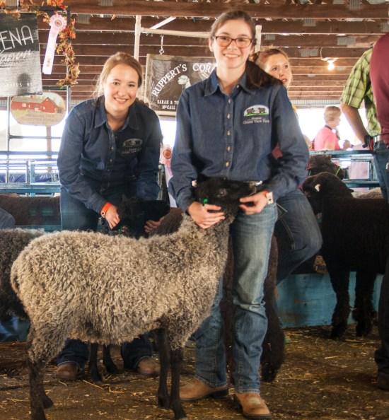 NY Sheep Show