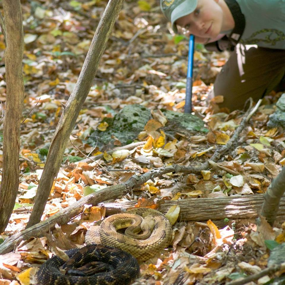 Timber rattlesnakes with Anne Stengle