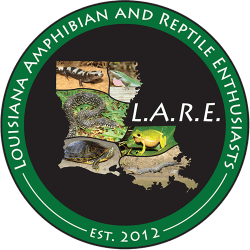 Louisiana Amphibian and Reptile Enthusiasts logo