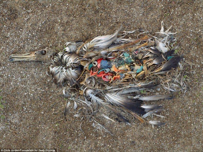 Pasarile mananca ce aruncam noi in mari si oceane