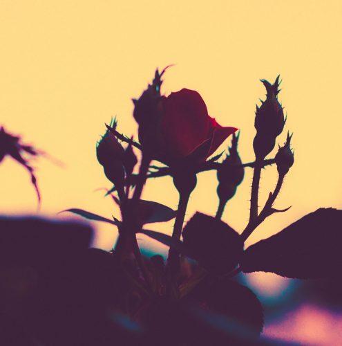 My Romance: No Lingerie, No Roses, No Chocolate