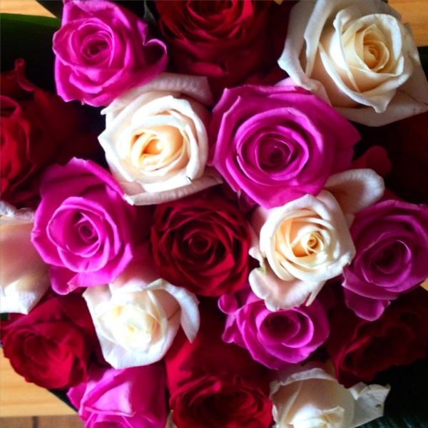 Great Western Roses