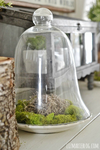 DIY Glass Cloche Moss Terrarium - So simple & a great way to bring greenery into your home! Awesome for spring & summer. A must pin for sure!