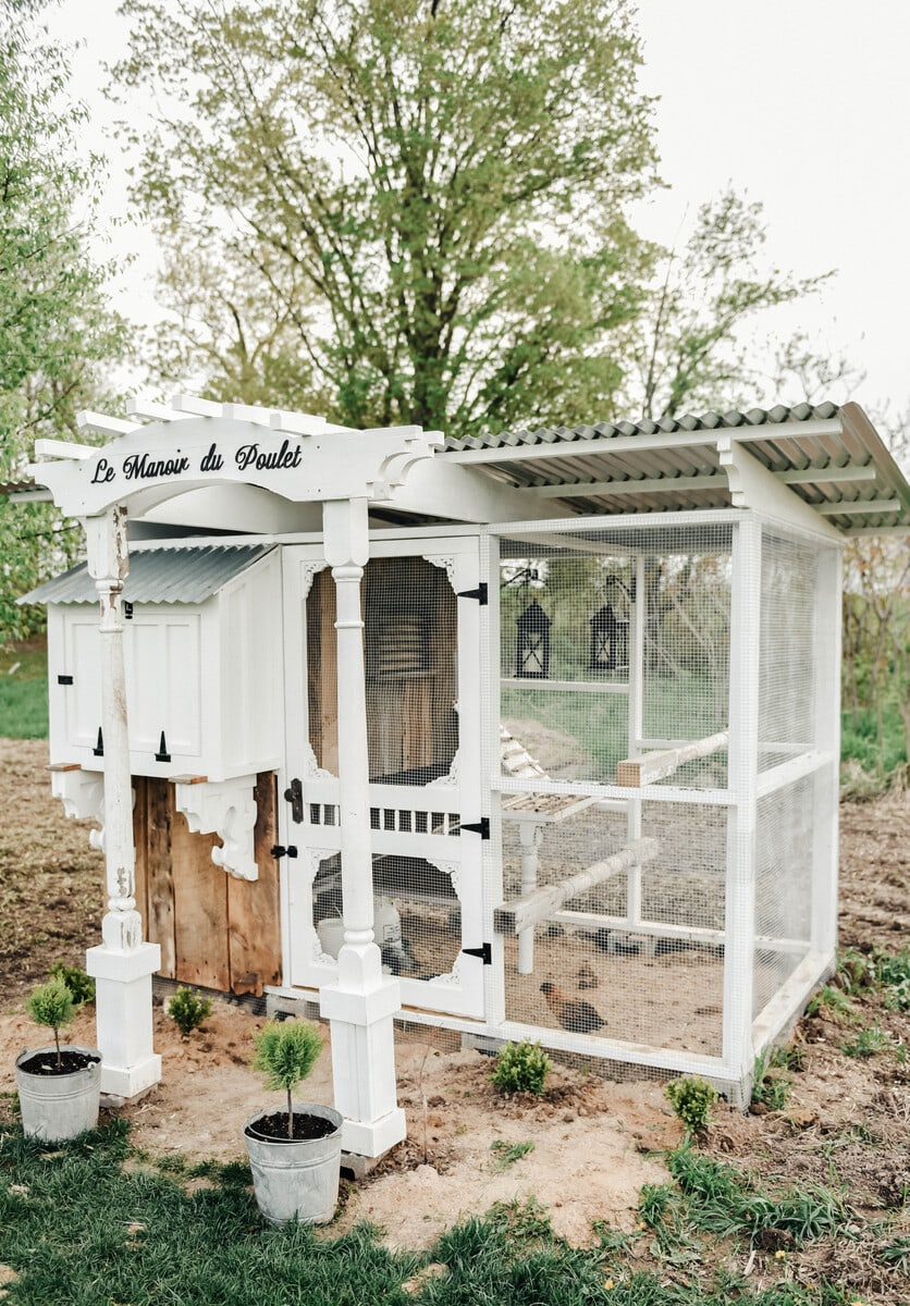 Cheap Mansions chicken coop mansions. cheap chicken coop mansions with chicken