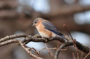 a small bird sitting on a tree limb