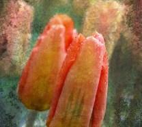 Peach: Digital collage © 2012 Liz Ruest