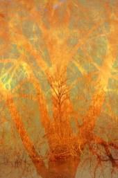 bramble: Digital collage, 25 layers