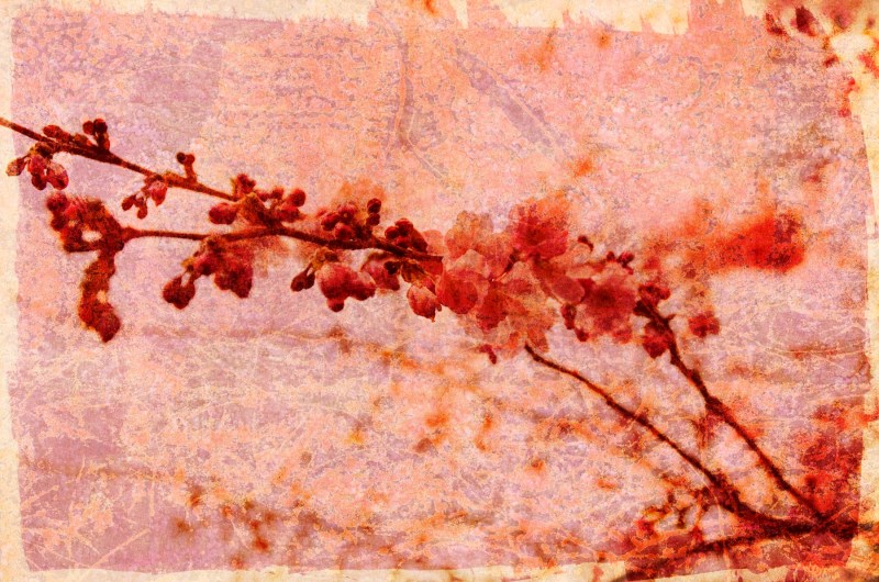 promise: Digital collage, 18 layers © 2020 Liz Ruest