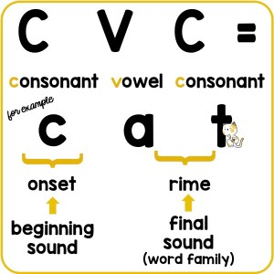 What is a CVC word?