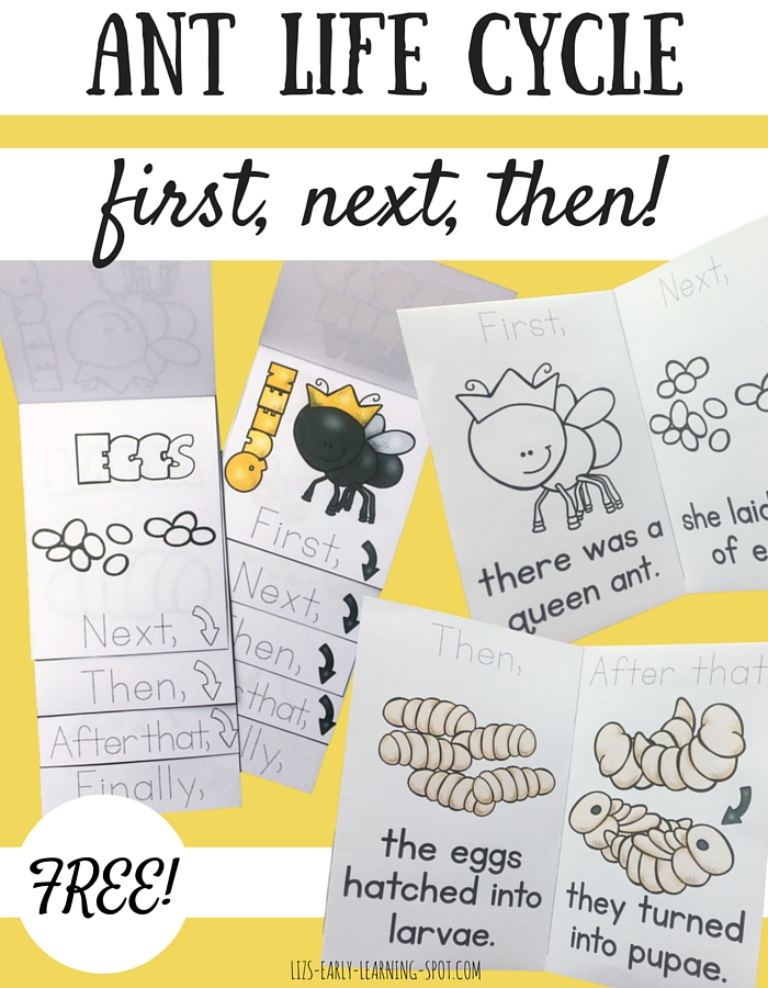 Printable Worksheets the grasshopper and the ant worksheets : Ant Life Cycle: First, Next, Then | Liz's Early Learning Spot