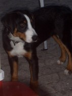 LaJuZi Helferfeier 30.07.2006 - 51