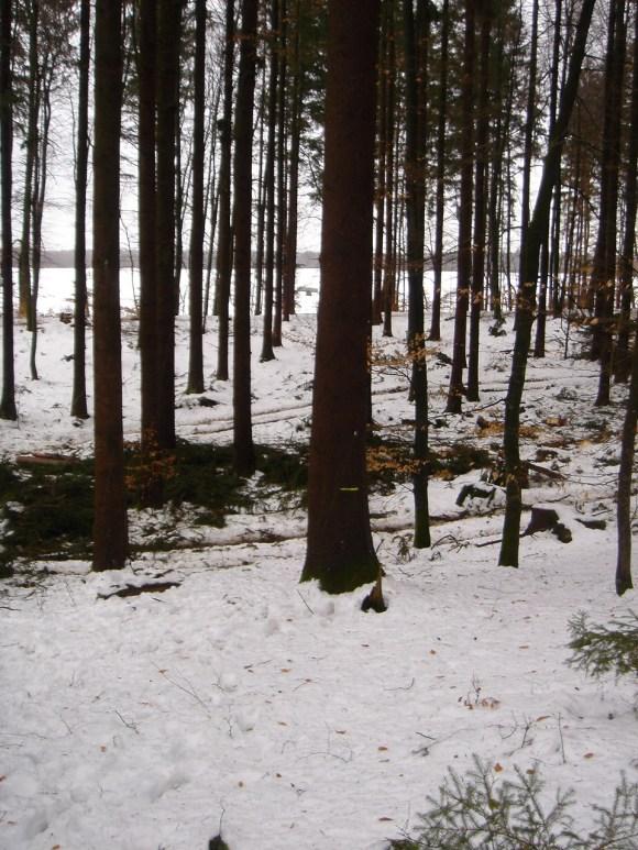 Maibaum Umschneiden 12.02.2005 - 01