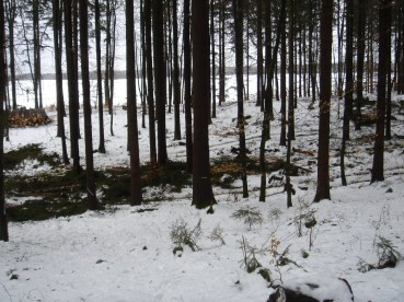 Maibaum Umschneiden 12.02.2005 - 02