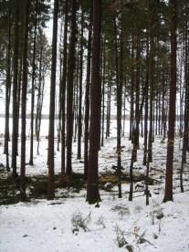 Maibaum Umschneiden 12.02.2005 - 03