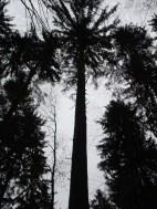 Maibaum Umschneiden 12.02.2005 - 09