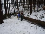 Maibaum Umschneiden 12.02.2005 - 18