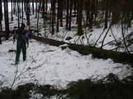 Maibaum Umschneiden 12.02.2005 - 21