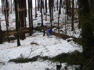 Maibaum Umschneiden 12.02.2005 - 22