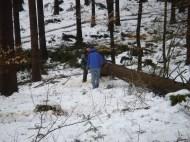 Maibaum Umschneiden 12.02.2005 - 23