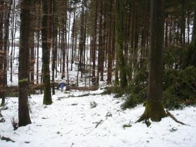 Maibaum Umschneiden 12.02.2005 - 25