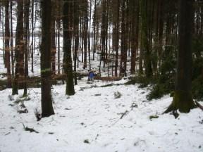 Maibaum Umschneiden 12.02.2005 - 26
