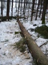 Maibaum Umschneiden 12.02.2005 - 32