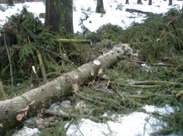 Maibaum Umschneiden 12.02.2005 - 33