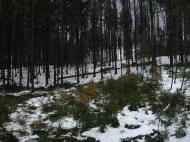 Maibaum Umschneiden 12.02.2005 - 37