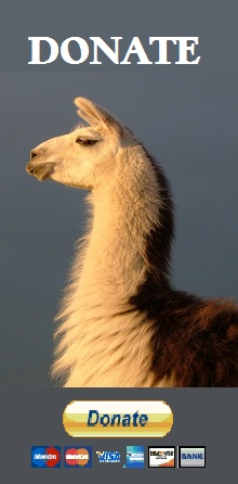 helping animals in need - donate to The Llama Sanctuary