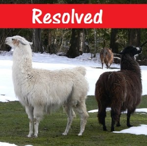 successful llama stories