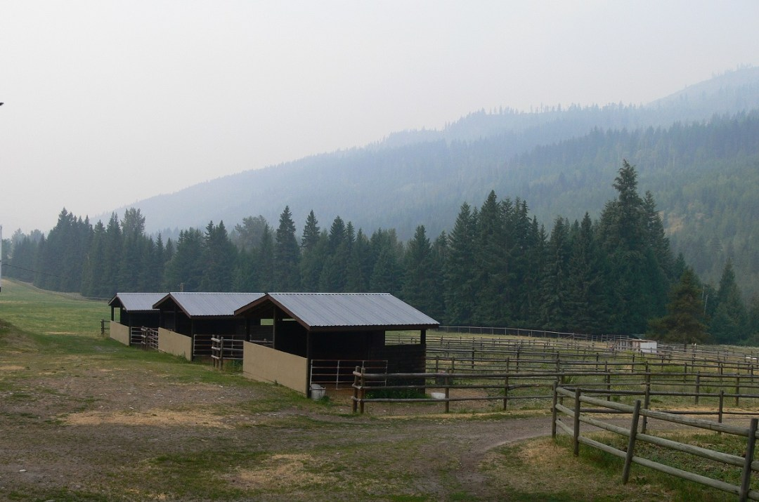 emergency in British Columbia, evacuation of llamas and alpacas