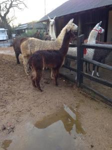 Dainty and Tiggy at ZSL Lonodon Zoo