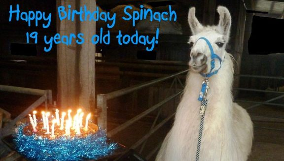 Spinach 19th Birthday