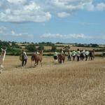 trekking through stubble fields