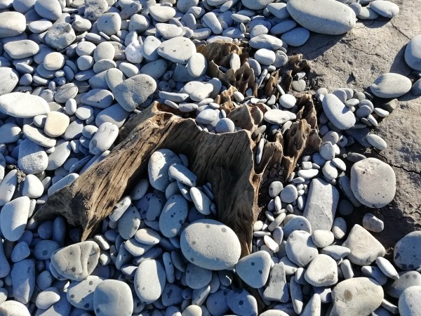 Tree stumps emerge on Llanrhystud beach