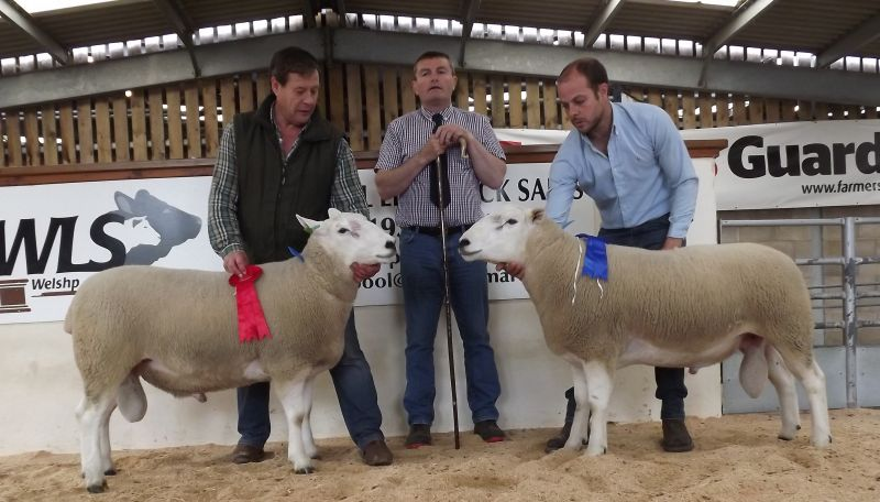1st Champion And 2nd Prize At Welshpool Society Sale 2017
