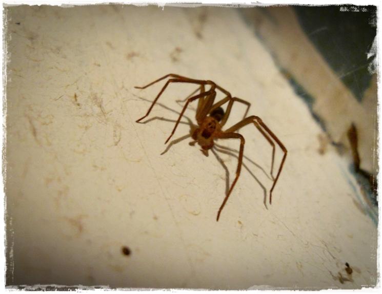 https://www.flickr.com/photos/arachnid_flame/