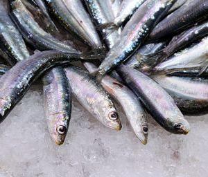 sardinas lliria_opt