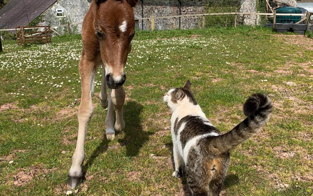 Orphan Foal Maggie's Story