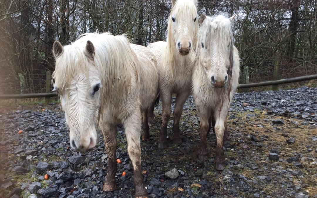 """""""Storm Ponies"""" Update"""