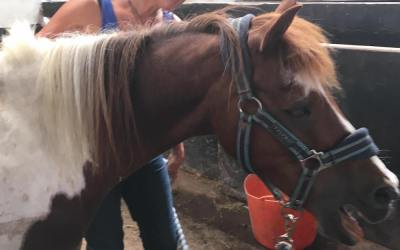Ina Thomson – Equine Assisted Learning Workshop Dates