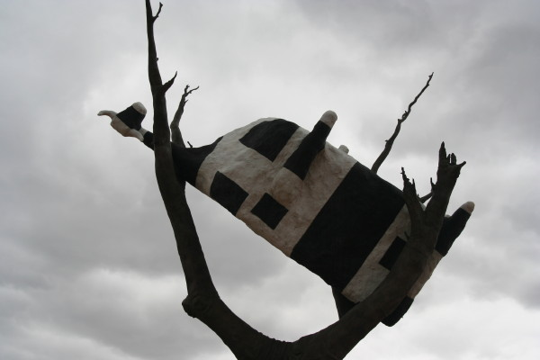 Cow up in a Tree!