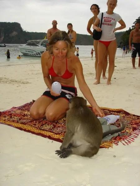phi phi monkey beach