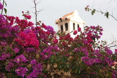 Flowers in Nerja